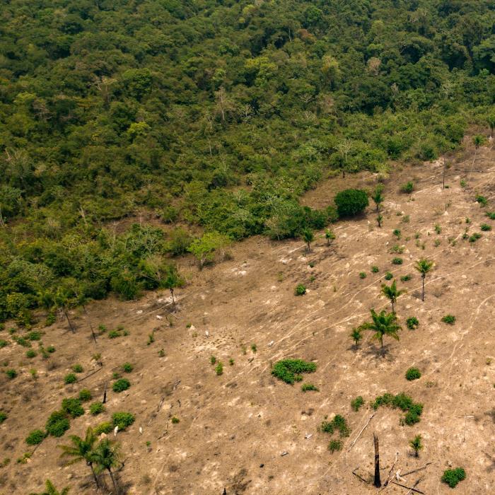 Ontbossing Amazone